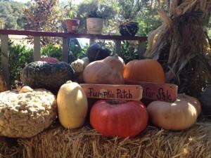 Pumpkin Display 1