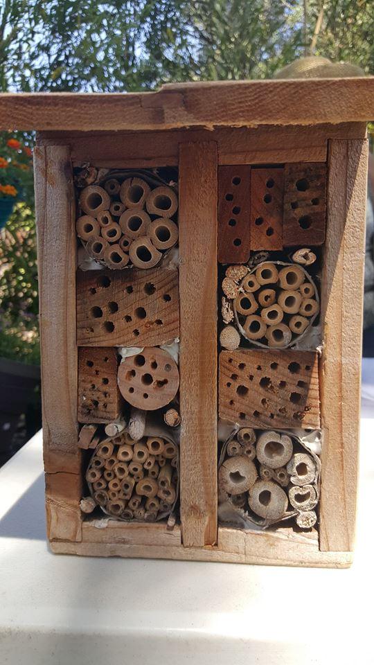 Native Bee Seminar